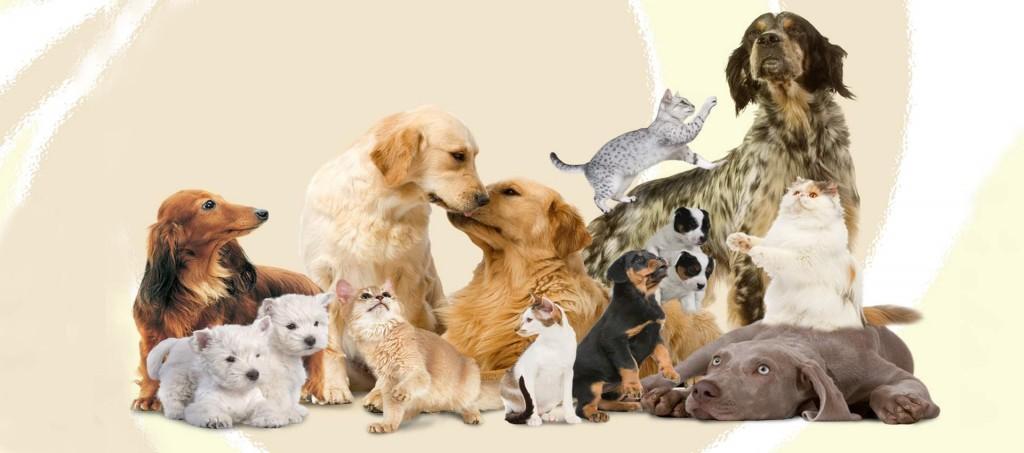 Veterinario - Alimentazione Nutrizione Animale